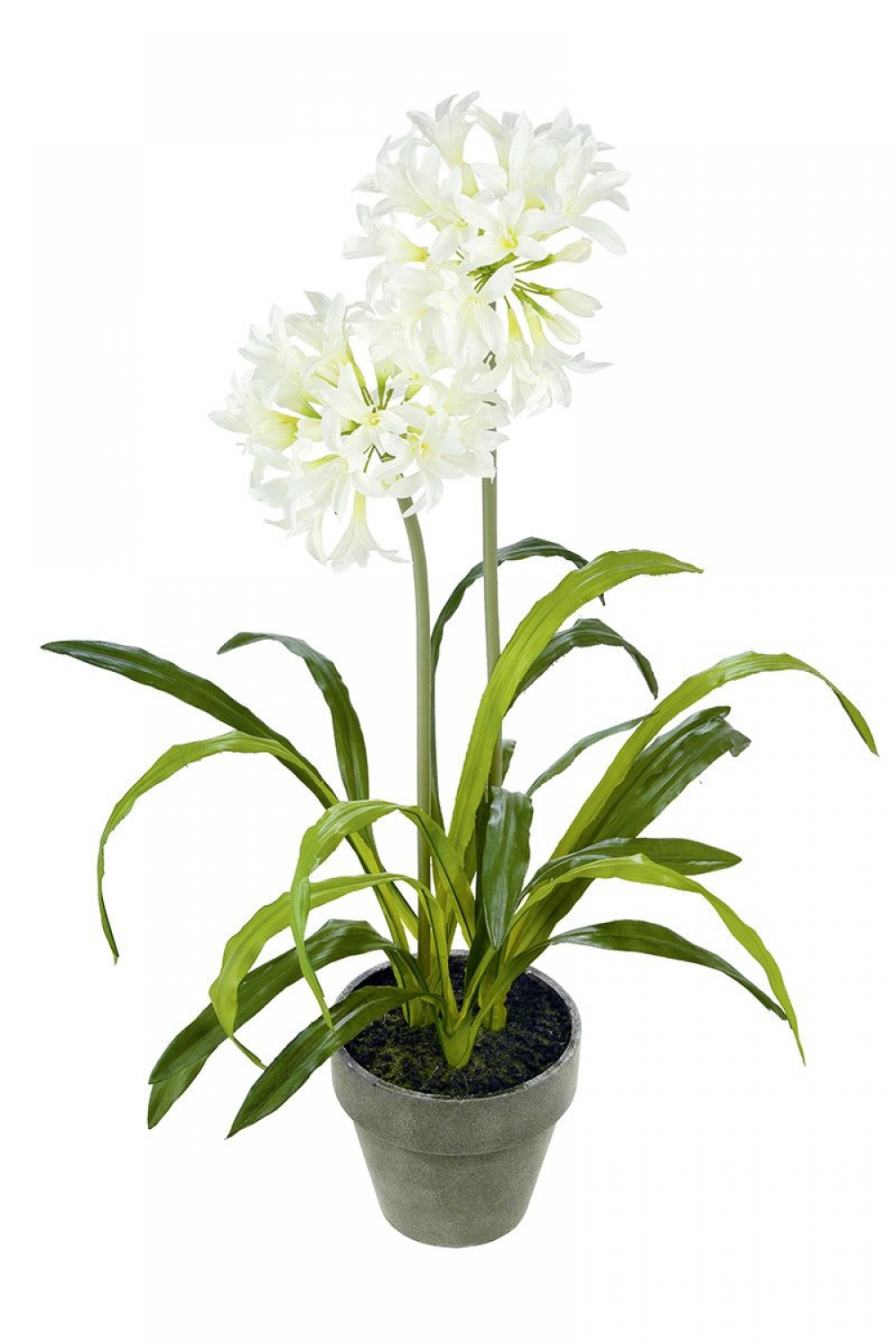 Flori de Agapanthus artificiale in ghiveci gri H38cm imagine 2021 insignis.ro